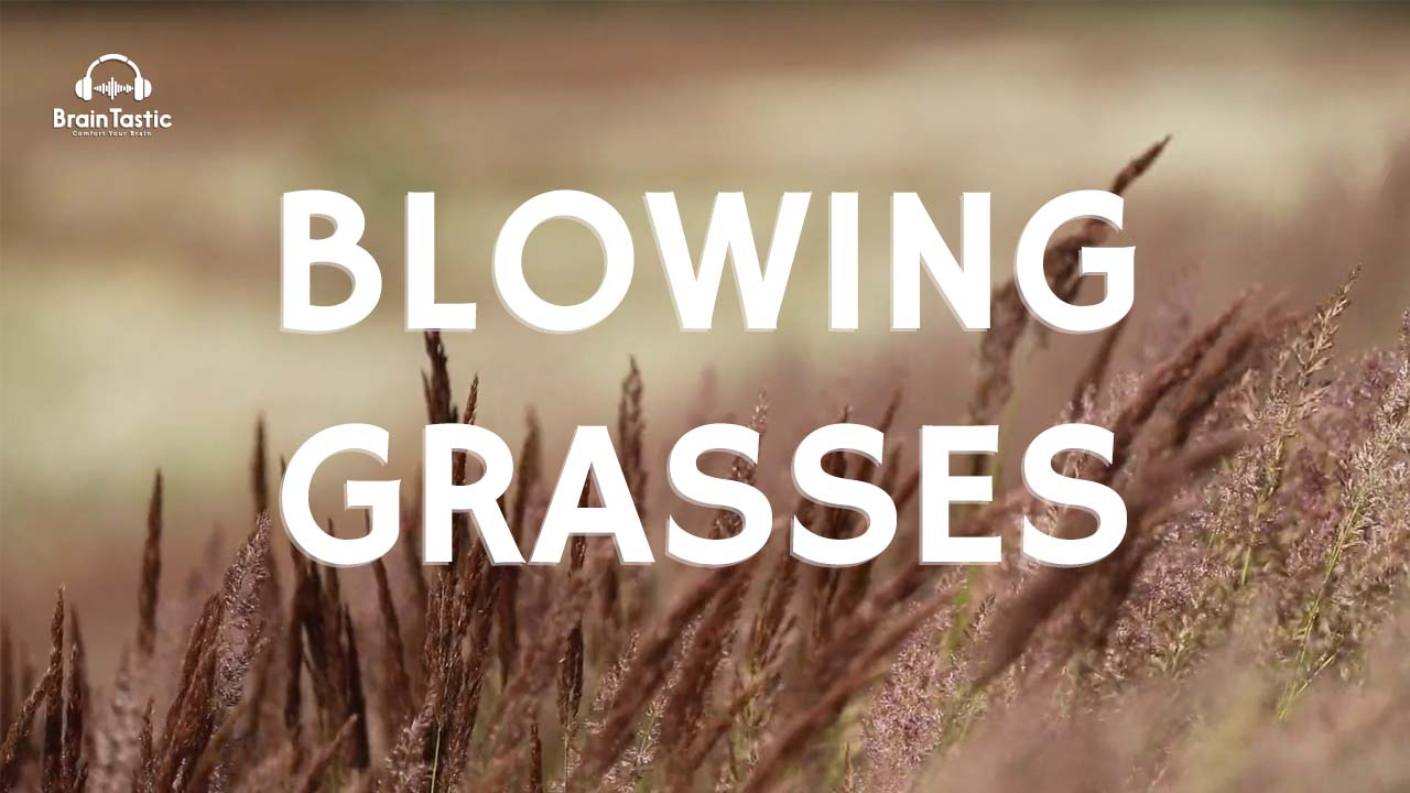 Wind Sound - Blowing Grasses
