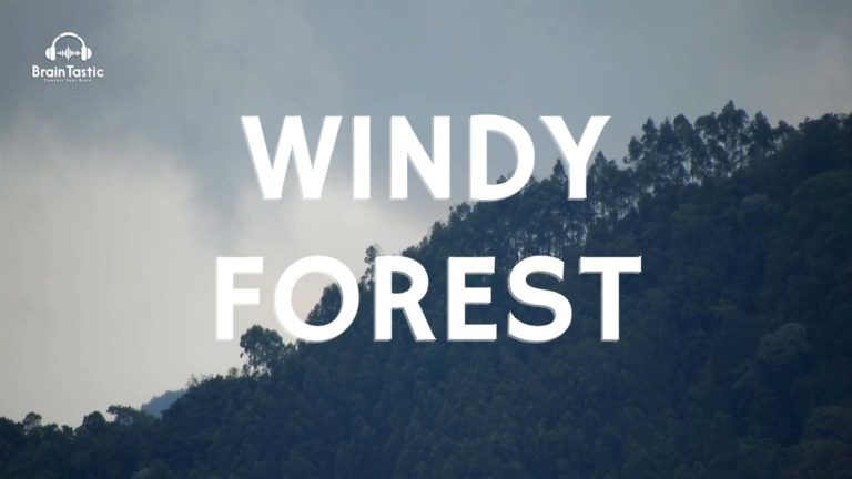 Wind-Sound-Windy-Forest