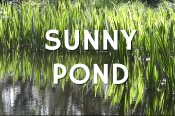 Splashing Water Sounds on Peaceful Pond - 1 hour - Nature Sounds - Study, Focus, Productivity